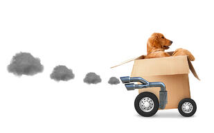 Dog in a cardboard box - fast delivery concetps